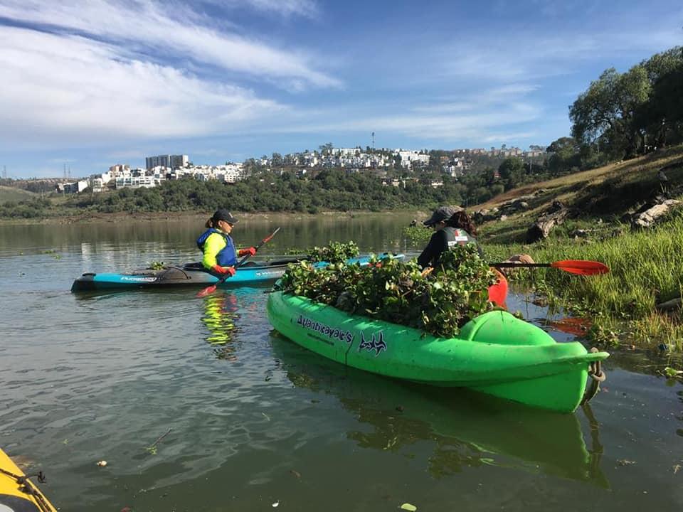 Con kayaks, la limpieza de lirio y basura en presa Madín