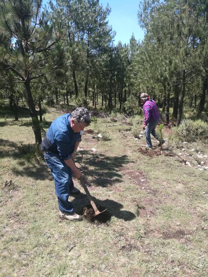 Un mayor esfuerzo de reforestación requieren alrededor de la presa Madín