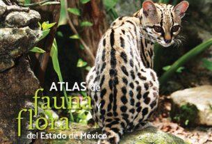 Las más diversas especies de flora y fauna en obra de científicos del Edomex