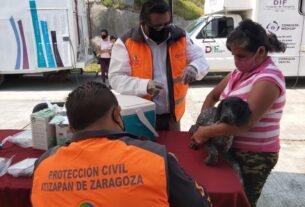 Atención de vacunas y desparasitación a perros y gatos en Atizapán de Zaragoza