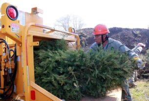 Los gobiernos del Estado de México y Naucalpan reciclan árboles de Navidad