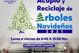 Inician recepción de árboles de Navidad en Huixquilucan